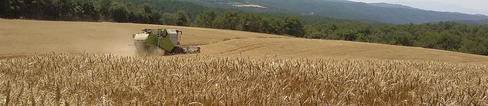 hd-casa-tarradellas-campos-de-trigo